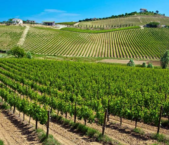 Wine Tour by Athens Limo